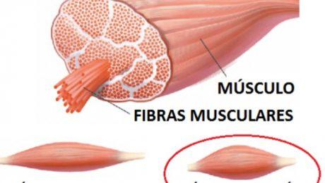 contracutra muscular